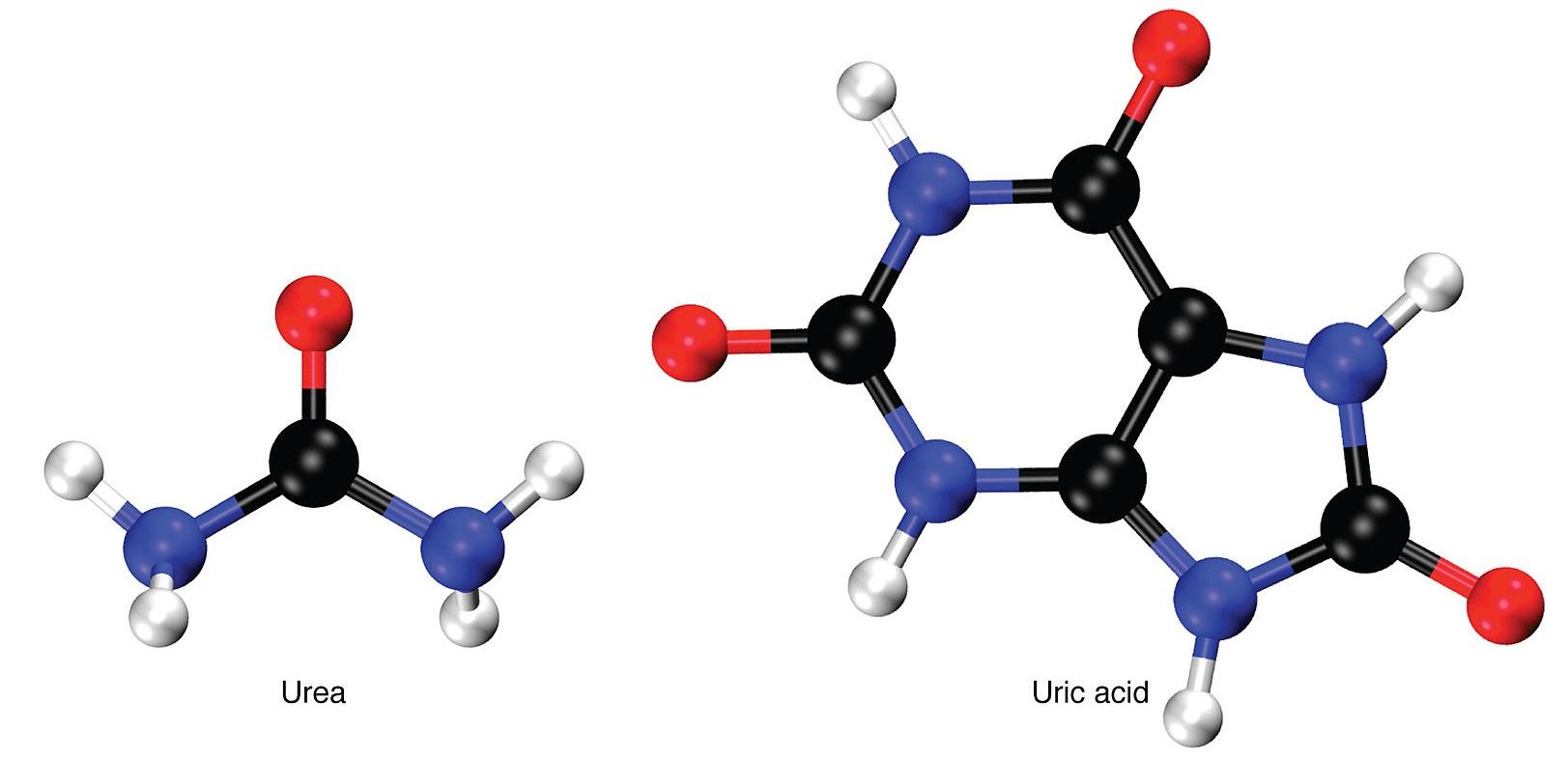 تفاوت بین اوره و اوریک اسید